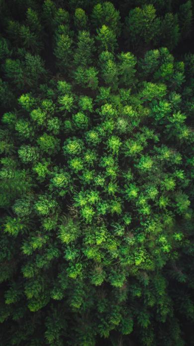 俯拍 森林 树木 绿色