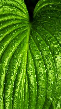 叶子 露水 绿色 纹路 新鲜