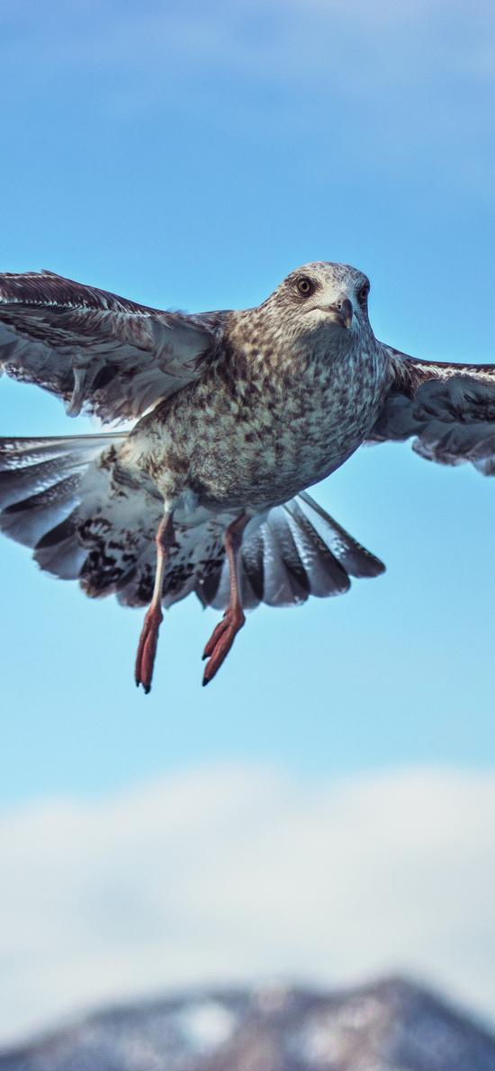 鸟 翅膀 飞行 天空