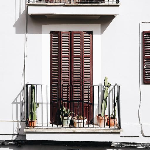 小阳台 盆栽 仙人掌 龙舌兰