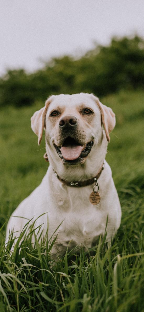 狗子 草地 笑容 欢乐