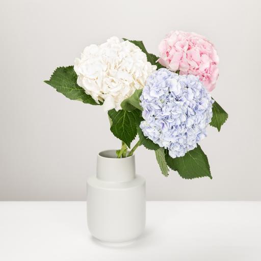 花瓶 插花 绣球花 蓝色 粉色 白色