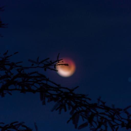 夜晚 天空 红月 树木