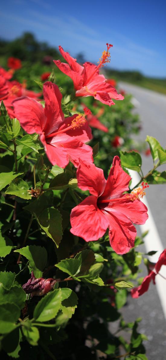 鲜花 道路 野花 盛开 花蕊