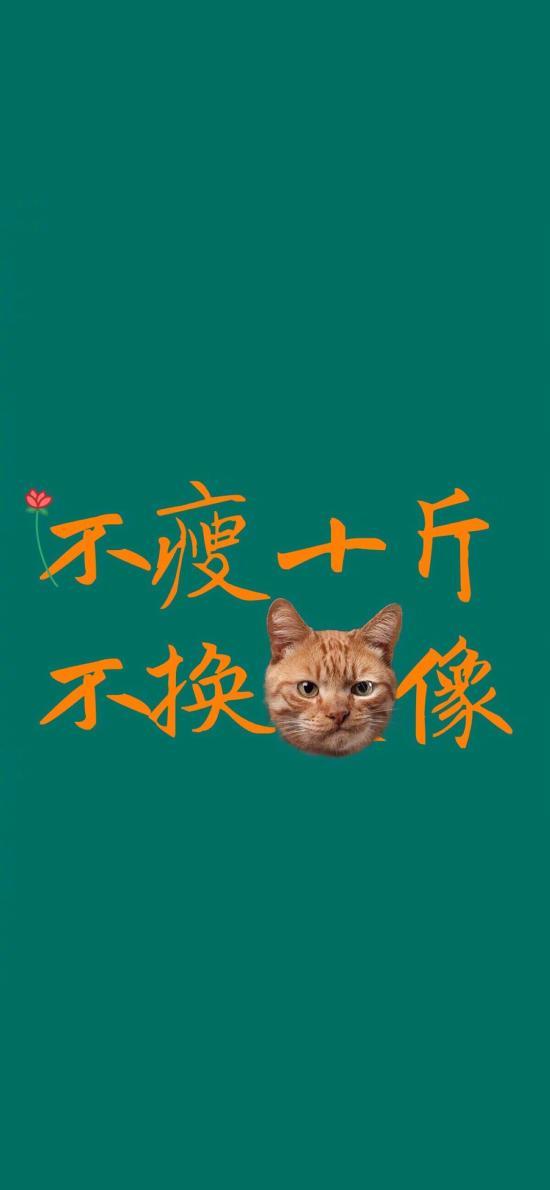 绿色背景 不瘦十斤 不换猫像