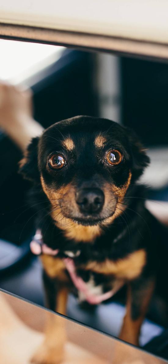 狗 宠物 汪星人 犬 可爱 驾驶位