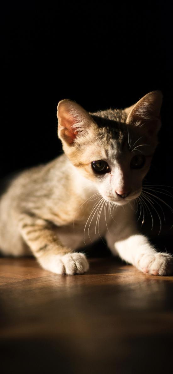 猫咪 宠物 幼仔