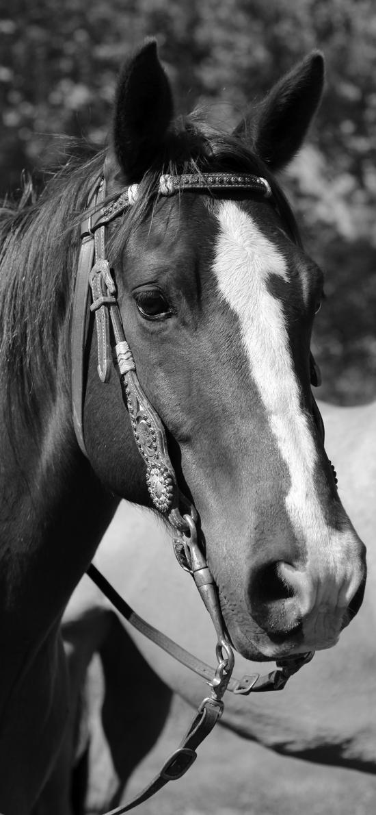 马 黑白 驹 鬃毛