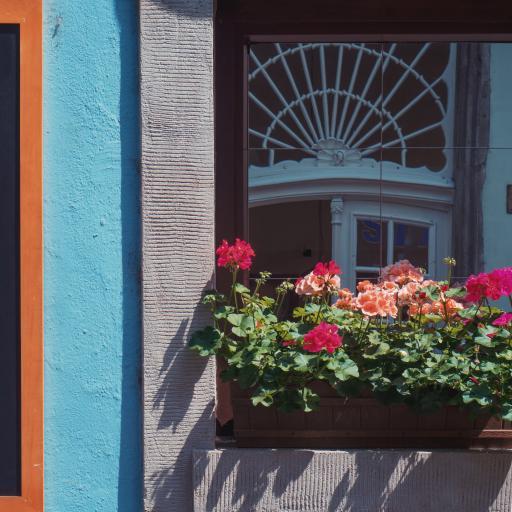 窗台 鲜花 种植 盆栽