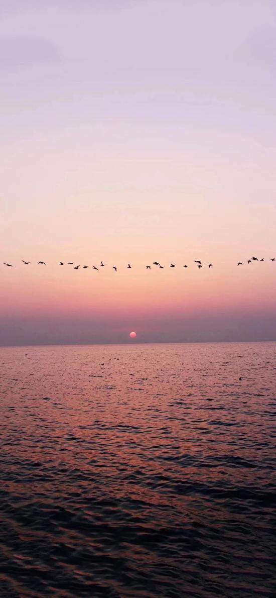 日落 大雁 大海 夕阳