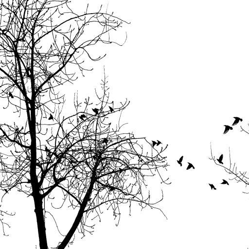 黑白 枯藤老树昏鸦 简约