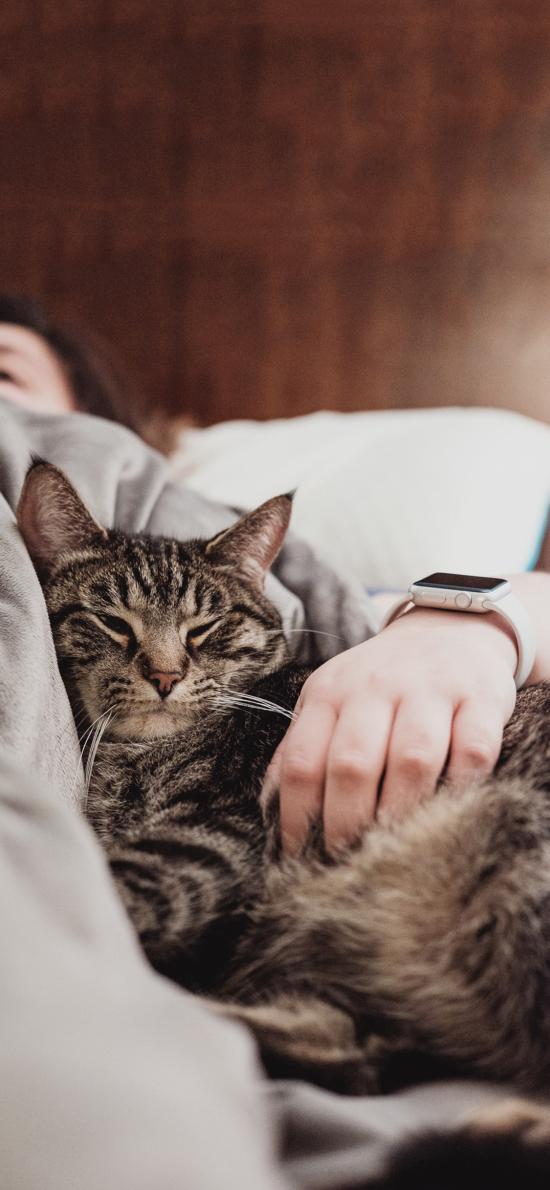 宠物猫 喵星人 猫咪 睡觉