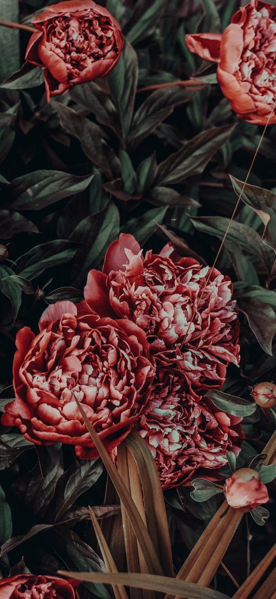 鲜花  盛开 花瓣 枝叶