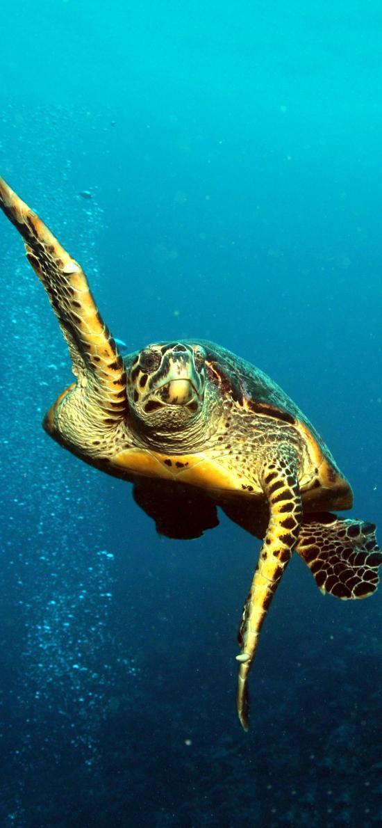海龟 海洋 大海 海底 游动