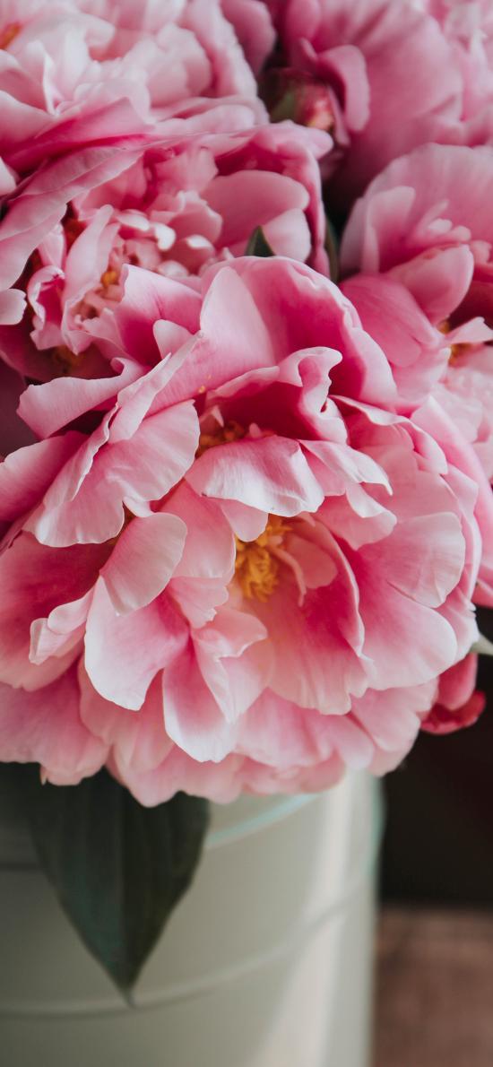 鲜花 植物 花瓶 花瓣 盛开