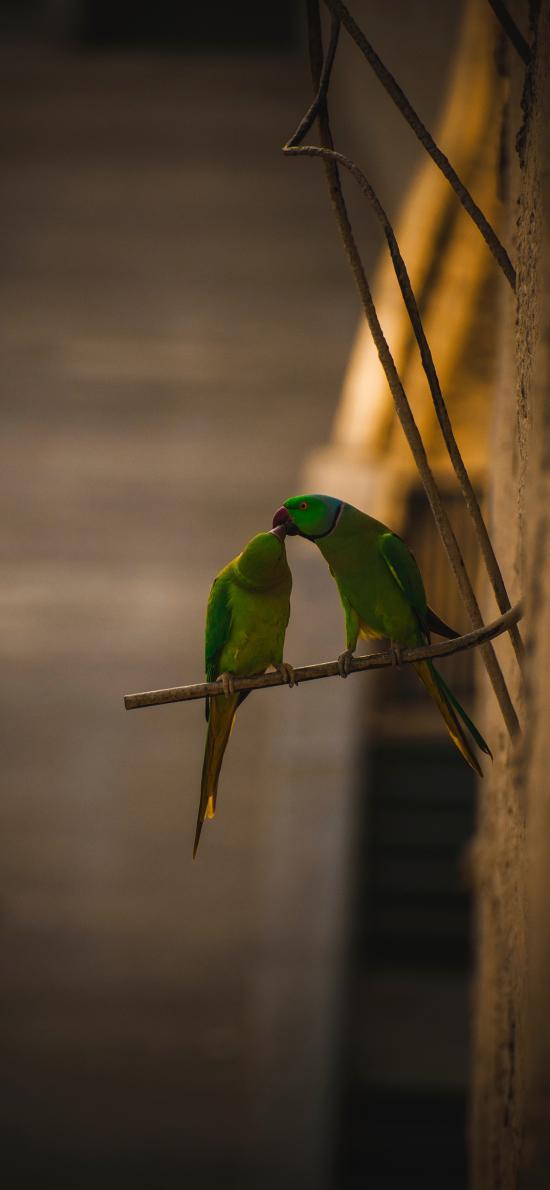 鸟类 鹦鹉  站立 羽毛