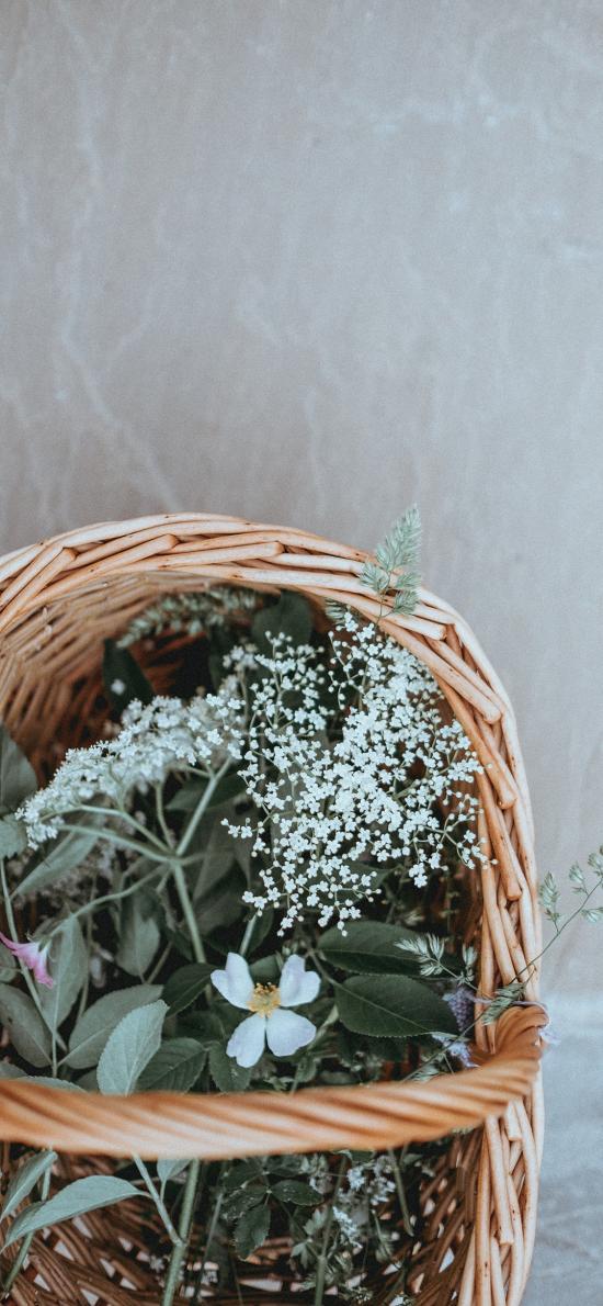 编织篮 植物 花草 满天星