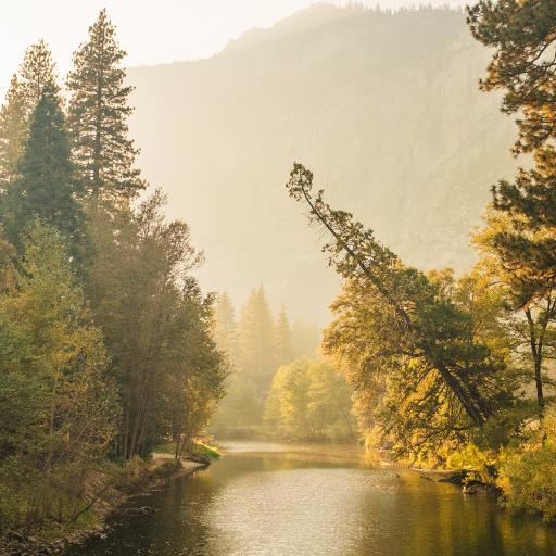 景色 河流 树林 雾气