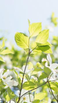 鲜花 绿叶 自然 清新