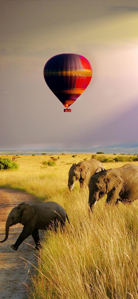 大象 户外 热气球 草原