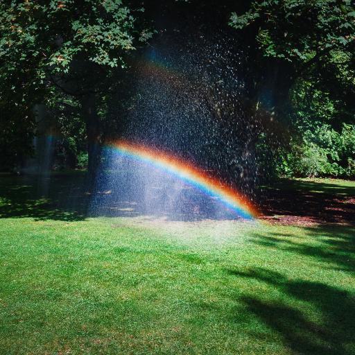 草坪 树木 雨水 彩虹 自然