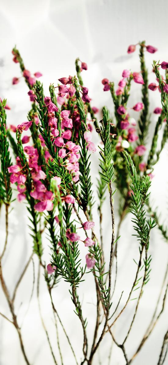 鲜花 小花 枝叶 浪漫