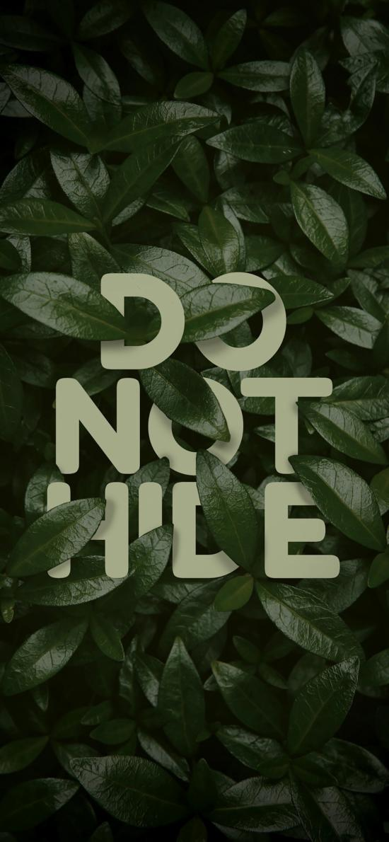do not hide 叶子 绿色 不要隐藏