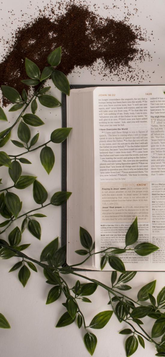 书本 英文 绿藤 绿叶