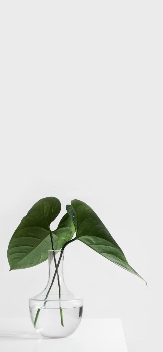 叶子 水培 绿色 玻璃瓶 小清新 绿化