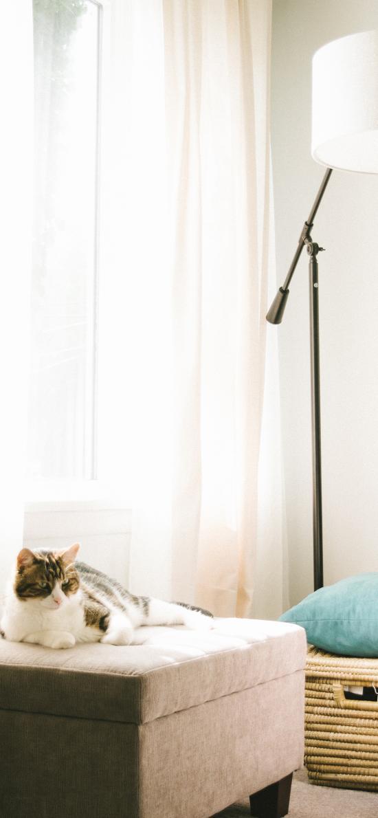 猫咪 宠物 家居 家具