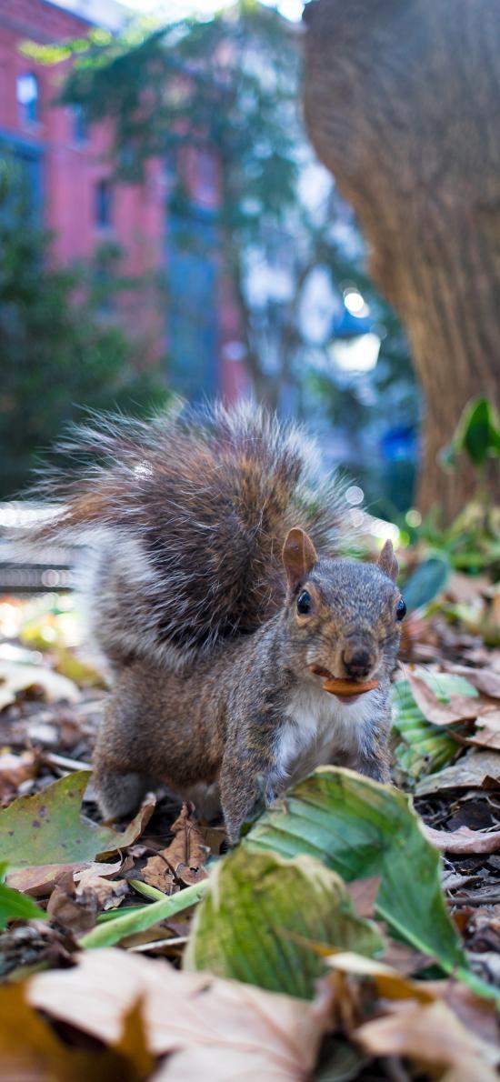 松鼠 树叶 落叶 找食