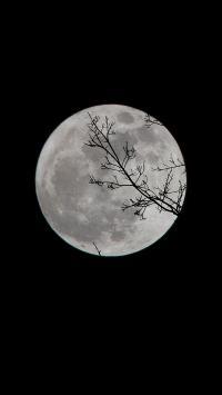 黑夜 月球 月亮 树枝