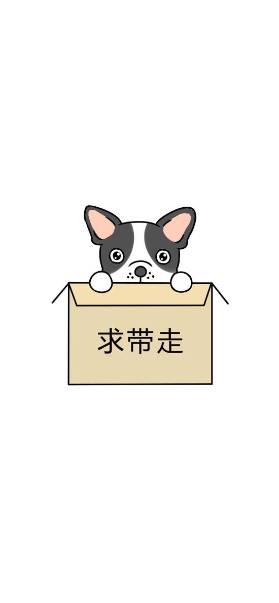 求带走 纸皮箱 狗狗 可爱
