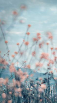 花丛 模糊 意境 自然