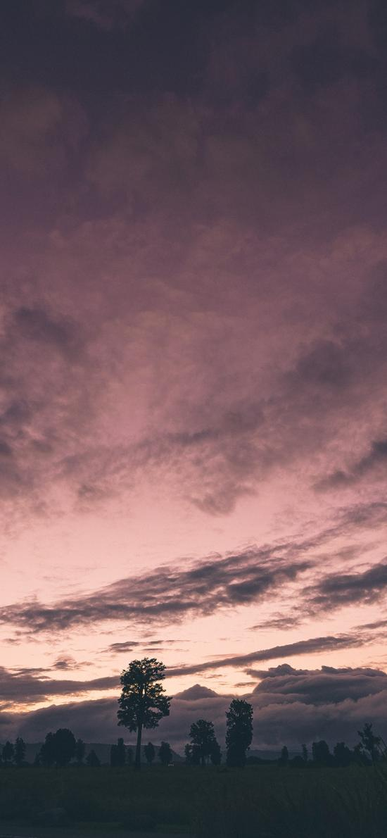 天空 云层 树木 自然美景