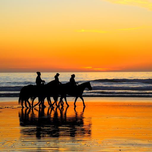 海边 落日 骑马 唯美