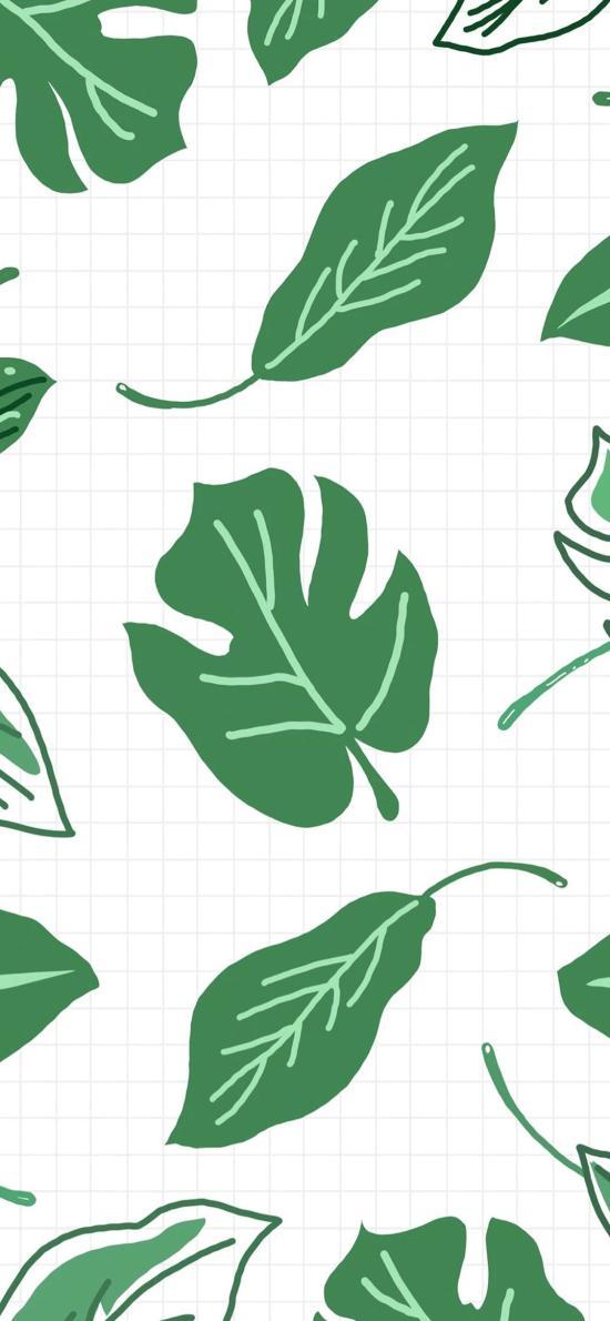 叶子 平铺 树叶 绿色 龟背竹