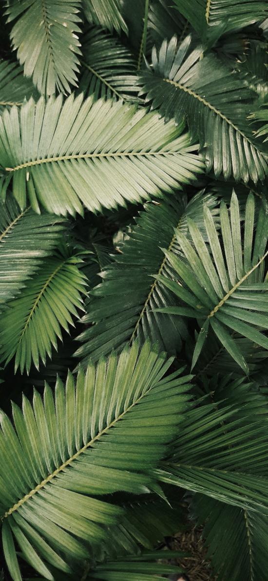 枝叶 树叶 绿叶 密集
