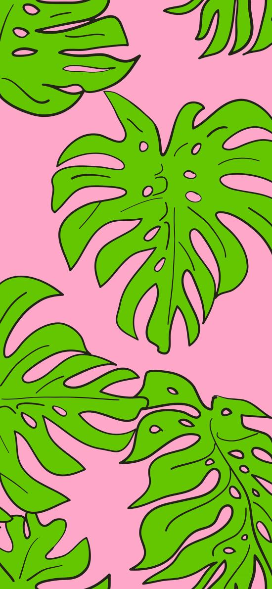 龟背竹 平铺 叶子