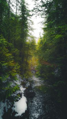 树林 高耸 融雪 翠绿