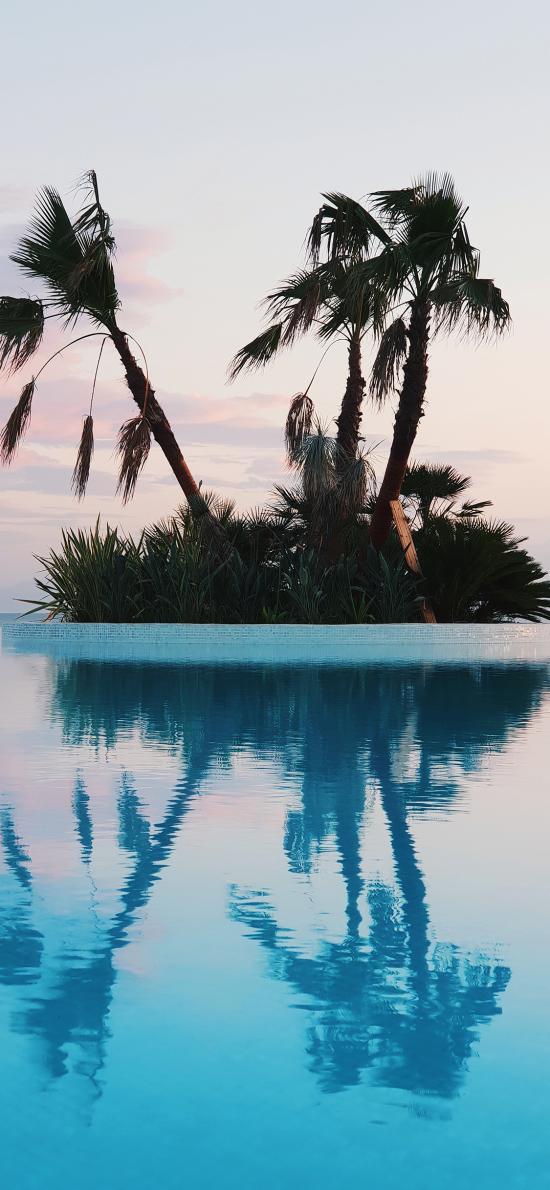 景色 椰树 倒映 泳池 对称