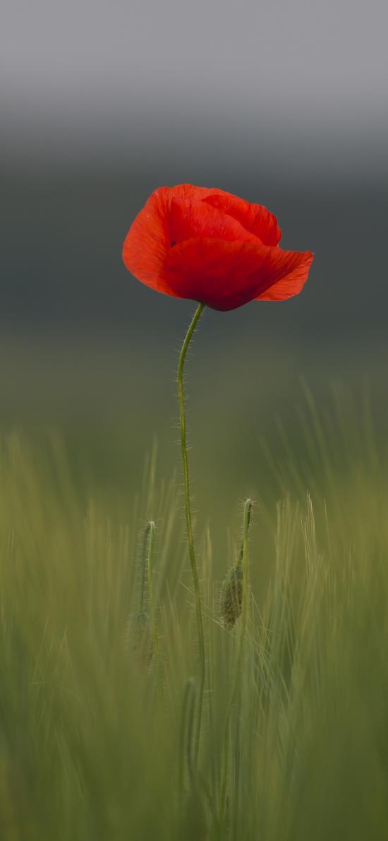 立春花 草地 鲜花 草本 花瓣