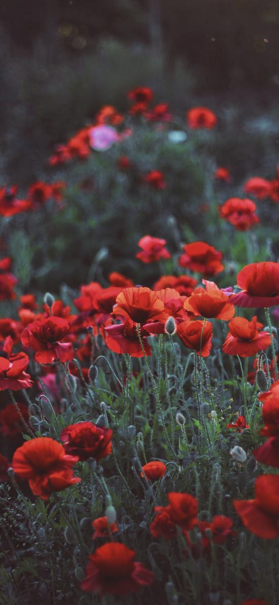 鲜花 花丛 植被 盛开