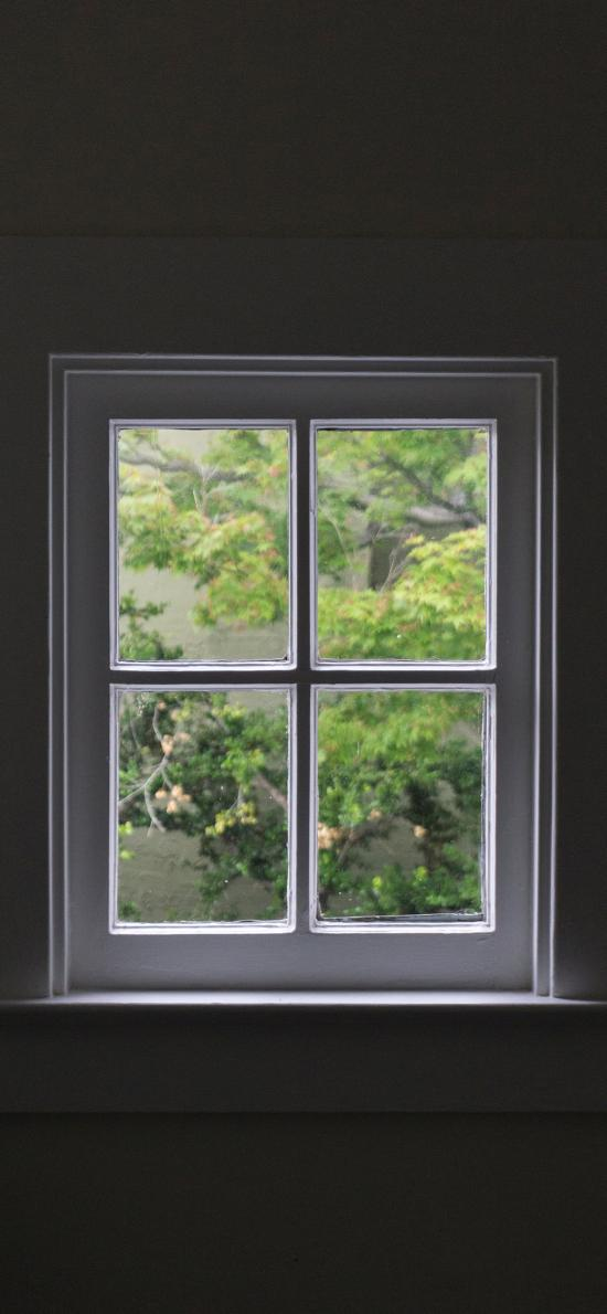 窗户 窗台 植物 外景