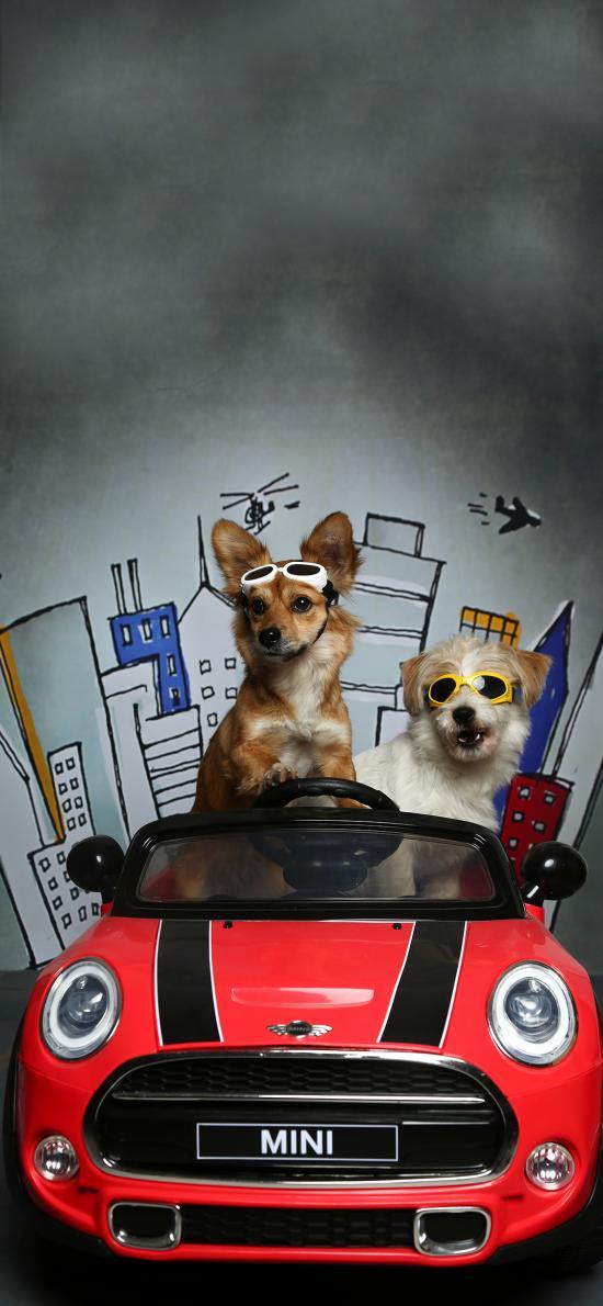 玩具车 狗狗 写真 创意
