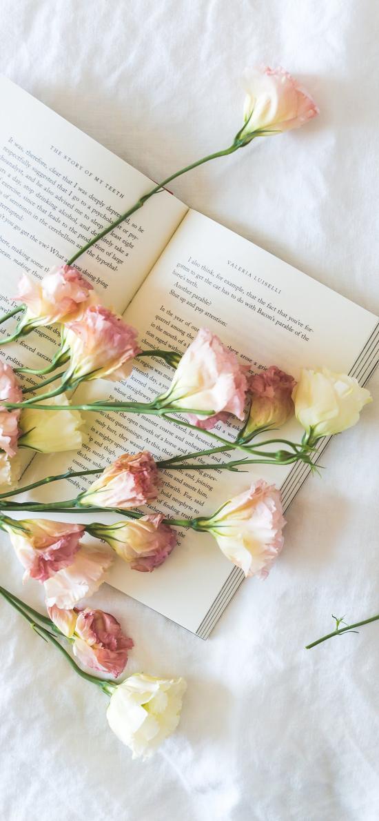静物 鲜花 书本 书籍
