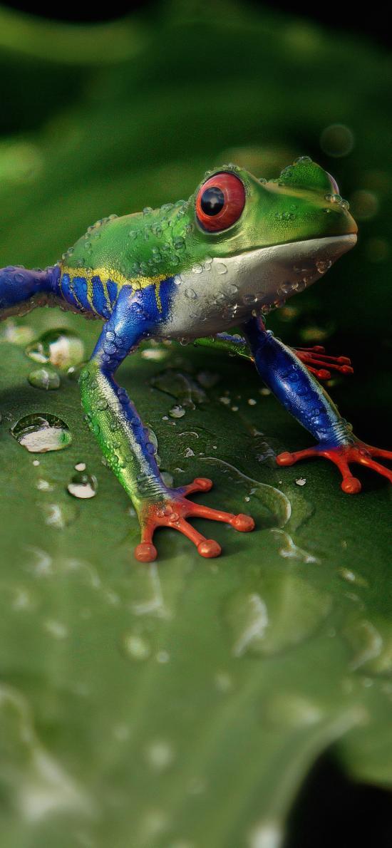 青蛙 树蛙 荷叶 绿色 雨水