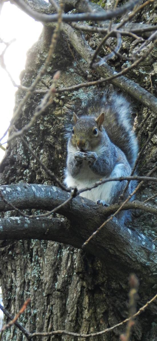 松鼠 树干 树枝 皮毛 啃食