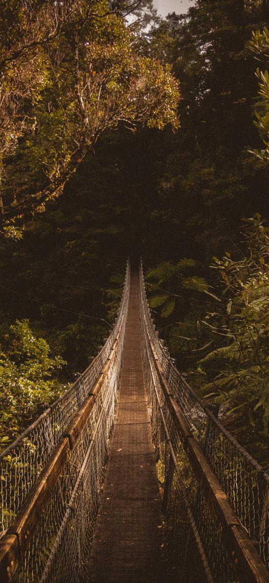 吊桥 丛林 森林 树林 大自然
