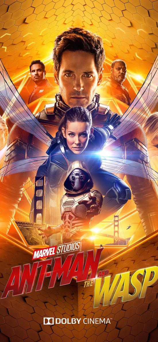 蚁人2 黄蜂女现身 电影 欧美 漫威 海报